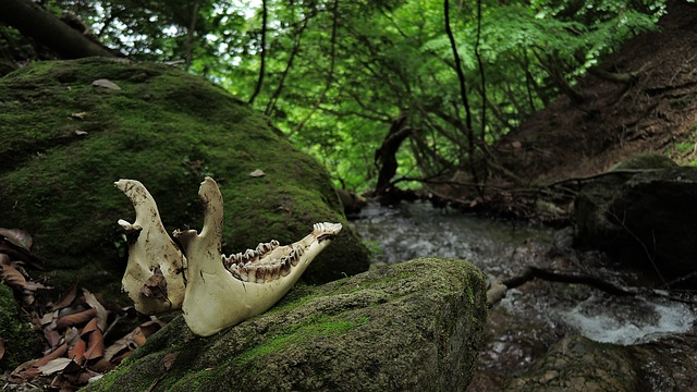 Bone, Death, Mountain, Woods, River, Small Animals