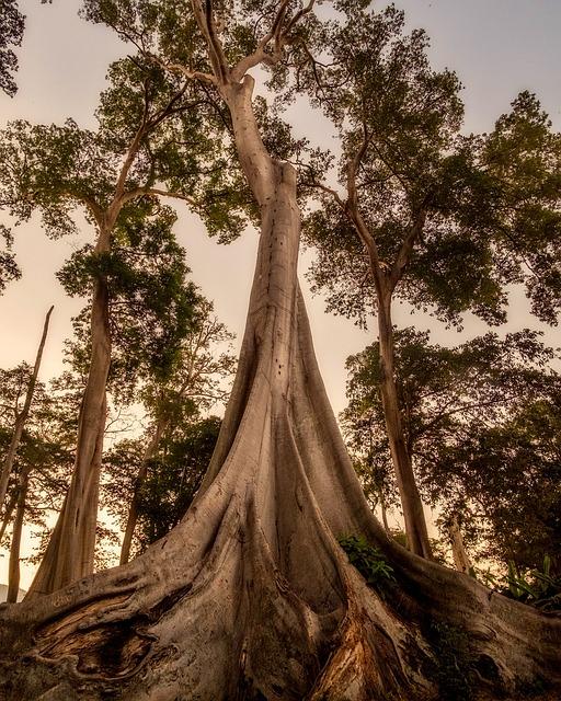 Trees, Woods, Large, Sunset, Dusk, Root, Landscape
