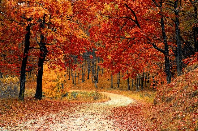 Fall, Autumn, Red, Season, Woods, Nature, Leaves, Tree