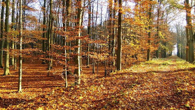 Autumn, Woodland, Natural, Woods