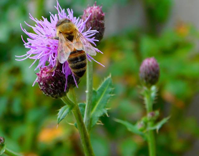 Bee, Bee On Flower, Hard Working, Work Diligently, Work