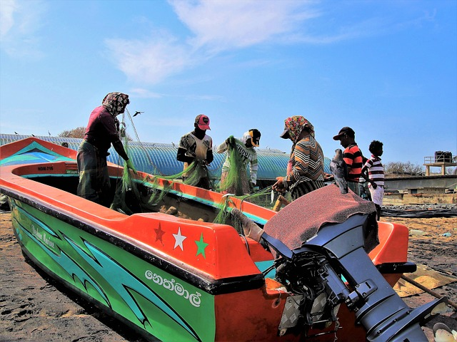 The Fisherman, Network, Work, Total, Colorful