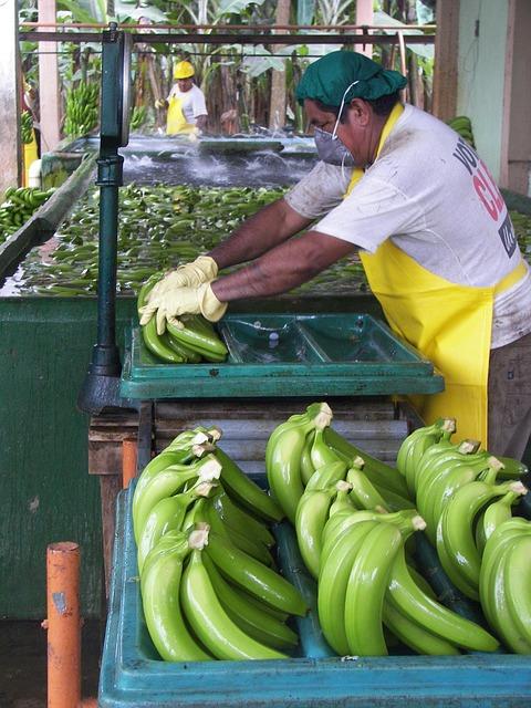 Man, Packaging, Workers, Pack, Sort, Organic Bananas