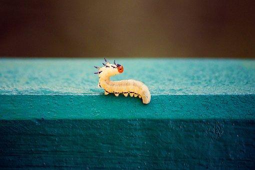 Worm, Millipede, Park, Nature, Summer, Animal, Yellow