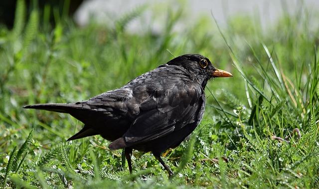 Kos, Worm, Grass, Bird