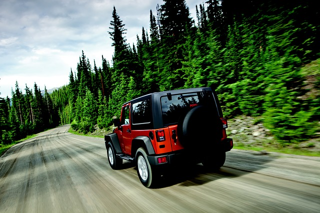 Wrangler, Jeep, Trees