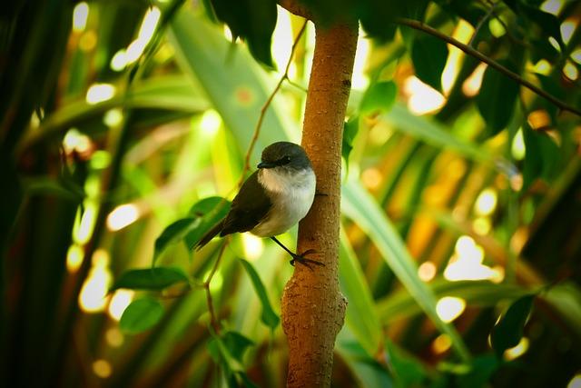 Wren, Bird, Wildlife, Nature, Tree, Branch, Feather