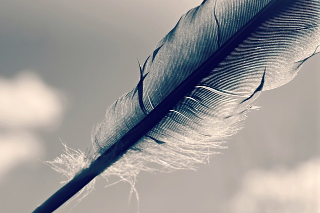 Feather, Quill, Shaft, Bird, Plumage, Plume, Writing