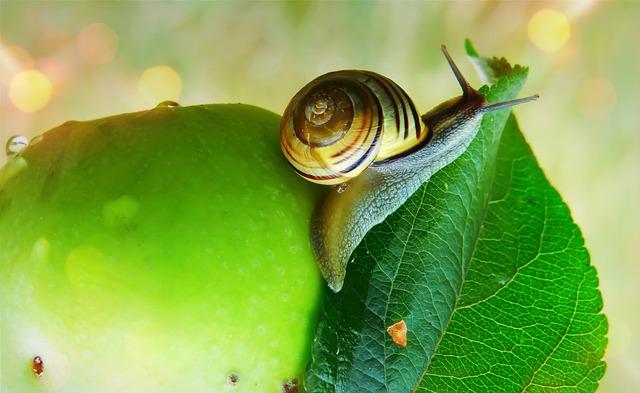 Wstężyk Huntsman, Molluscs, Leaf, Fruit, Garden