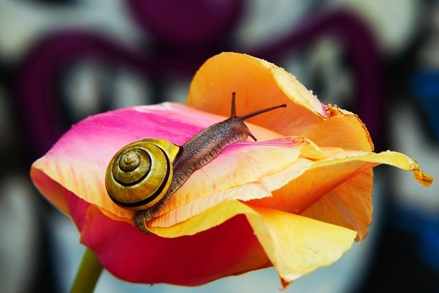 Wstężyk Huntsman, Molluscum, Tulip, Graffiti, Wall