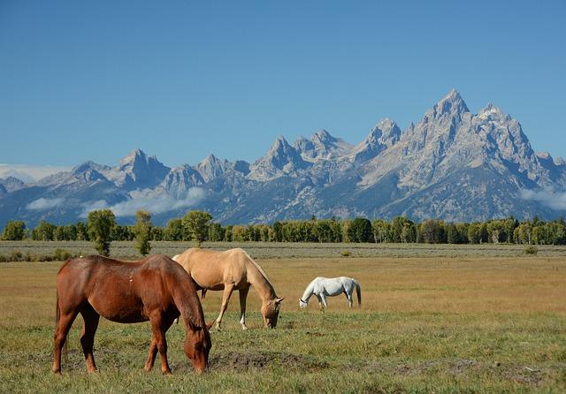 Horses, Mountains, Landscape, Wyoming, Mountain