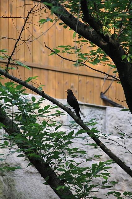 Bird, View, Xihu