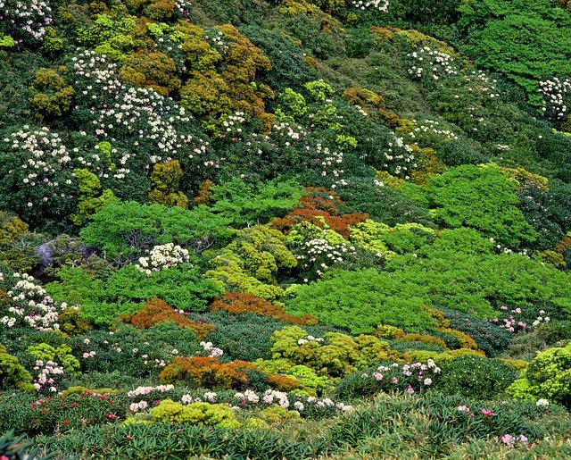 Vegetation, Yakushima Highland, Yak The Rhododendrons