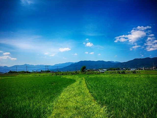 Tanaka, Yamada's Rice Fields, The Countryside