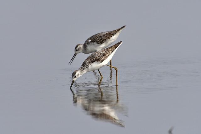 Bird, Wild Animals, Swamp, Waters, Yamada's Rice Fields