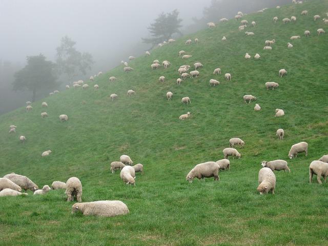 Gangwon Do, Ranch, Livestock, Yang, Animal, Farm