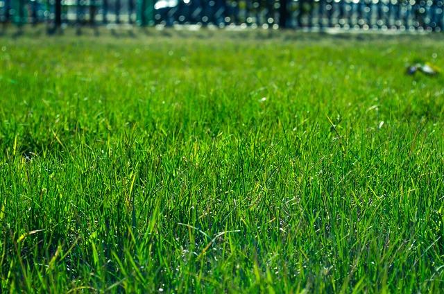 Lawn, Grass, Green, Field, Meadow, Sod, Backyard, Yard