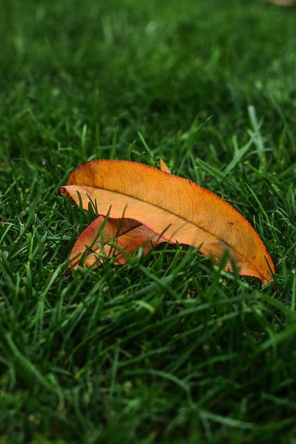 Autumn, Alone, The Bodice, Peach, Grass, Brown, Yellow