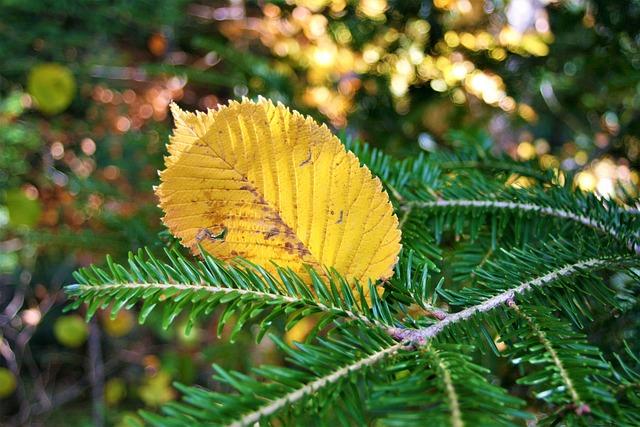 Autumn, Yellow, Autumn Foliage, Leaf, Strap, Spacer