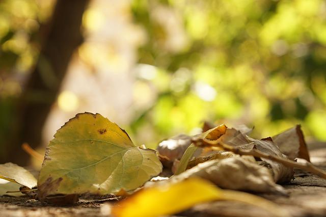 Leaves, Autumn, Yellow, Leaf, Plate