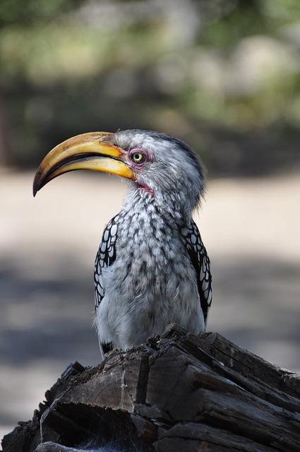 Hornbill, Bird, Bill, Yellow