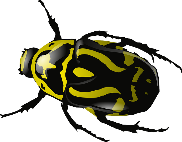 Bug, Insect, Beetle, Wasp, Yellow, Black, Wildlife