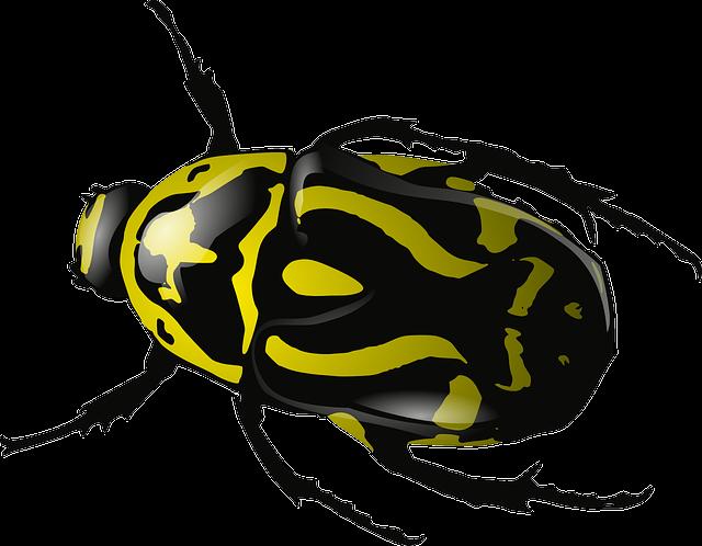 Bug, Insect, Beetle, Wasp, Yellow, Black, Wildlife