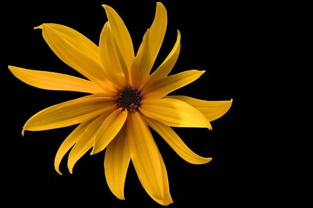 Blossom, Bloom, Flower, Yellow, Yellow Flower