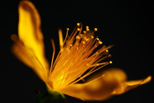 Macro, Flower, Nature, Yellow, Blossom, Bloom, Plant