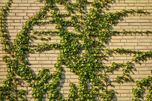 Brick Wall, Wall, Brick, Yellow Brick Wall, Ivy