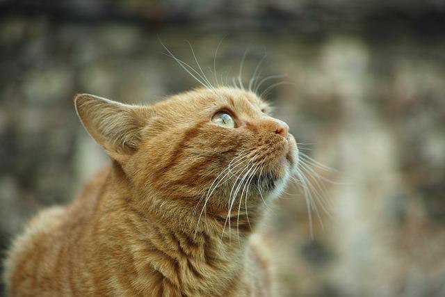 Cat, Yellow, Animal, Cute, Animals, Eye, Street, Little