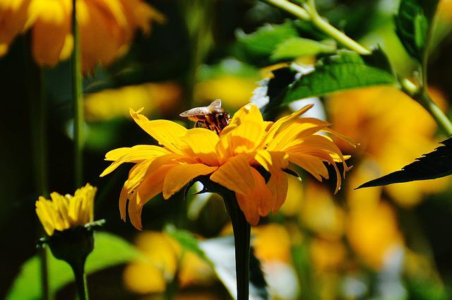 Flower, Yellow, Blossom, Bloom, Bee, Nature, Close Up