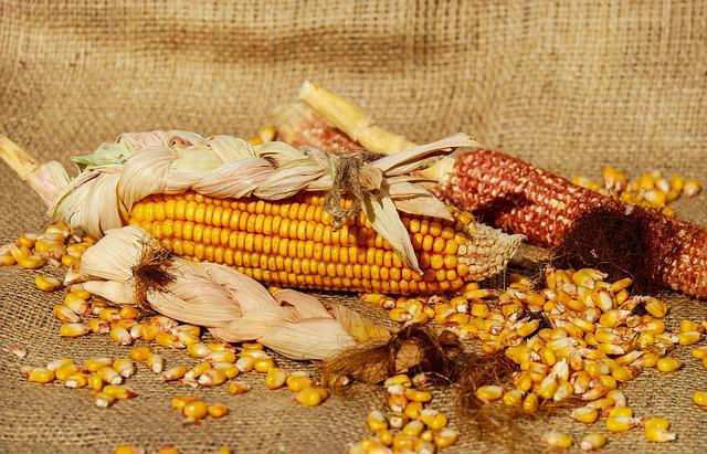 Corn, Piston, Corn Kernels, Yellow, Food, Crop, Plant