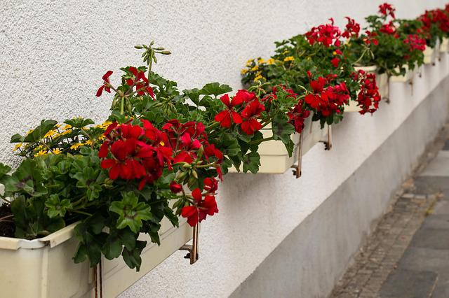 Flower Boxes, Flowers, Red, Yellow, Flower Box, Facade