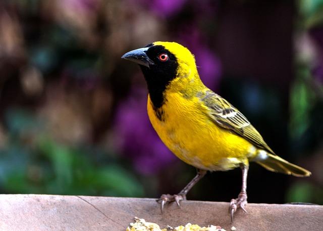 Yellow Finch, Bird, Garden, Nature