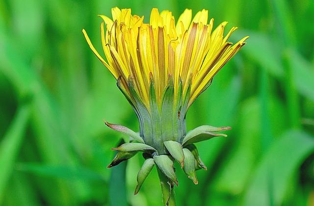Nature, Flower, Flowers, Garden, Macro, Yellow