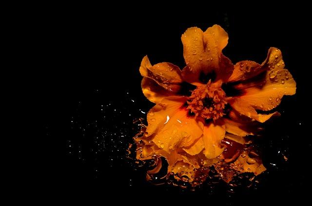 Flower, Yellow, Spehel