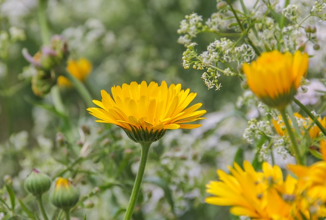 Flower, Nature, Plant, Petal, Yellow, Summer