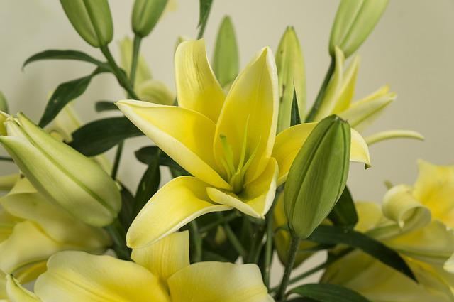 United Glass, Flower, Yellow, The Beauty, Plant