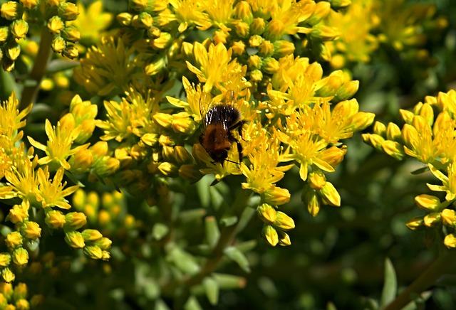 Bumblebee, Yellow Flowers