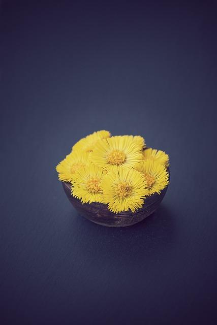 Tussilago Farfara, Flower, Flowers, Yellow Flowers