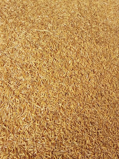 Rice Crust, Rice, Yellow Gold