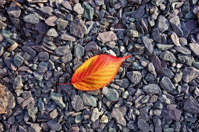 Leaf, Autumn Leaf, Red, Yellow, Fall Leaves, Pebbles