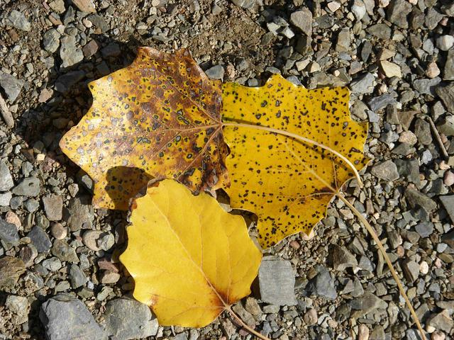 Leaves, Autumn, Yellow Leaves, Dead Leaves