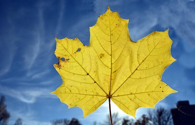 Leaf, Maple Leaf, Autumn, Leaves, Nature, Yellow