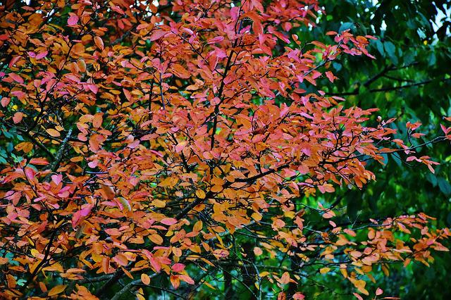 Nature, Autumn, Tree, Leaves, Yellow, Red