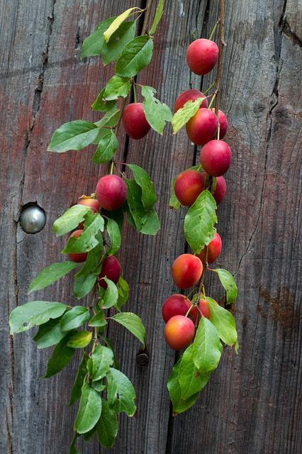 Wood, Board, Fruit, Branch, Yellow Plums, Background
