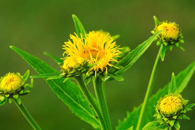 Flower, Yellow, Flowers, Plant, Public Record