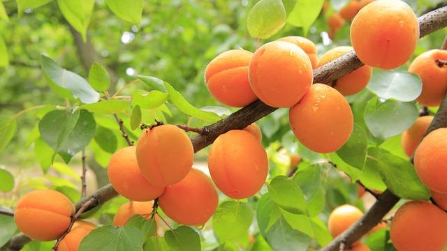Peaches, Peach, Fruit, Rain, Water Drops, Yellow