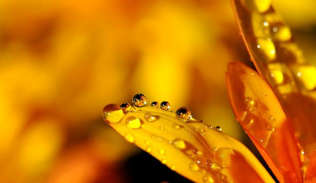 Drip, Blossom, Bloom, Yellow, Drop Of Water, Raindrop